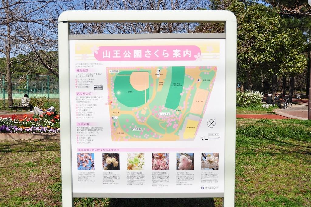 山王公園6