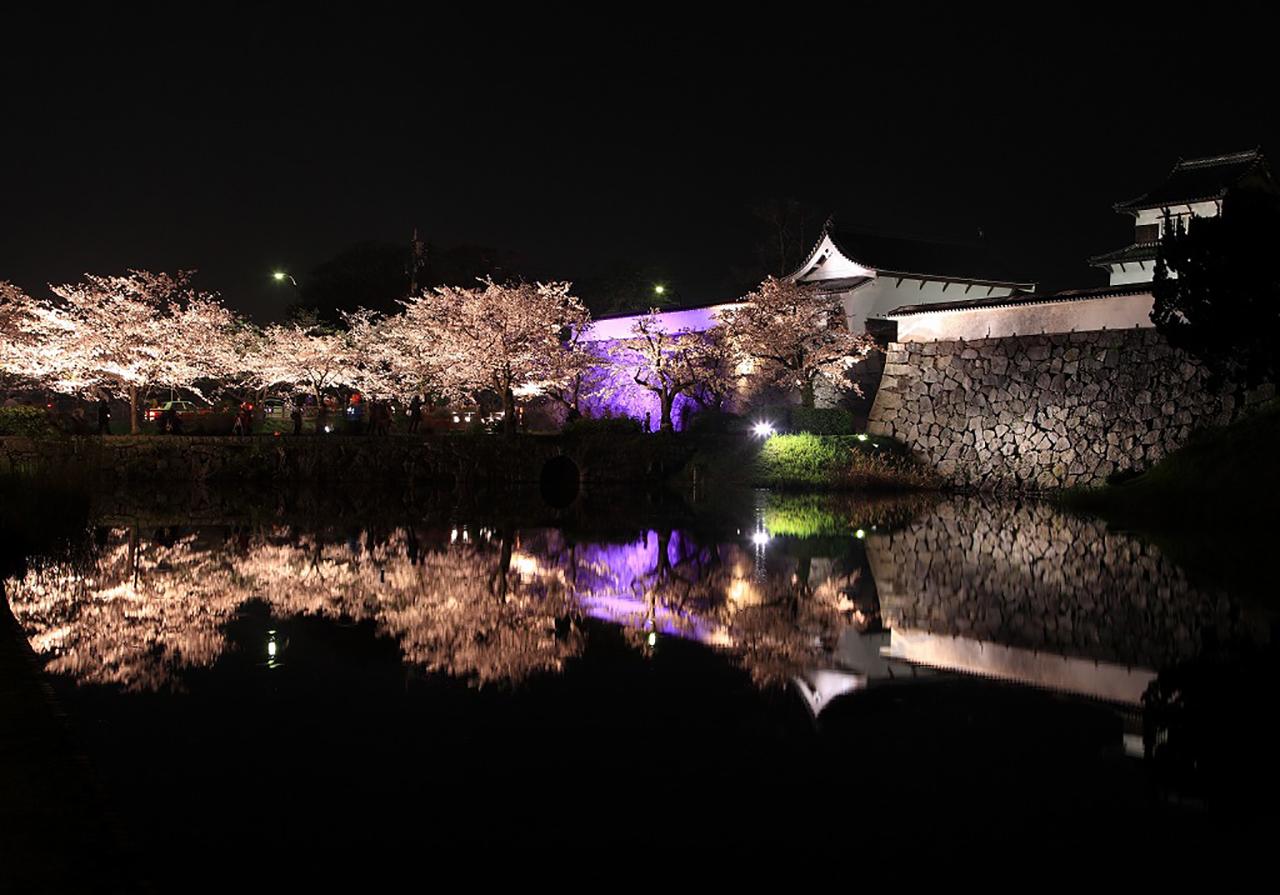 福岡市中央区舞鶴公園 桜のライトアップ2