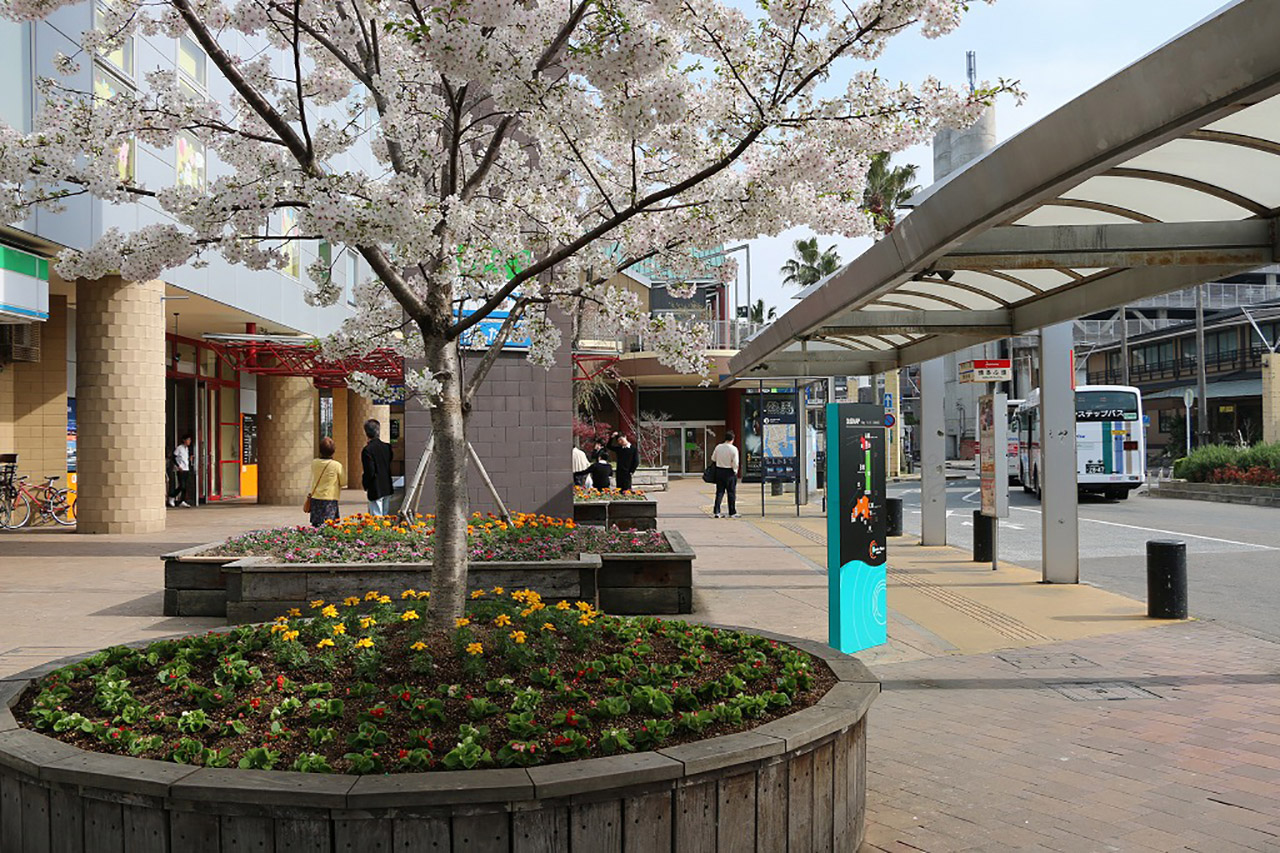 ベイサイドプレイス博多の桜1