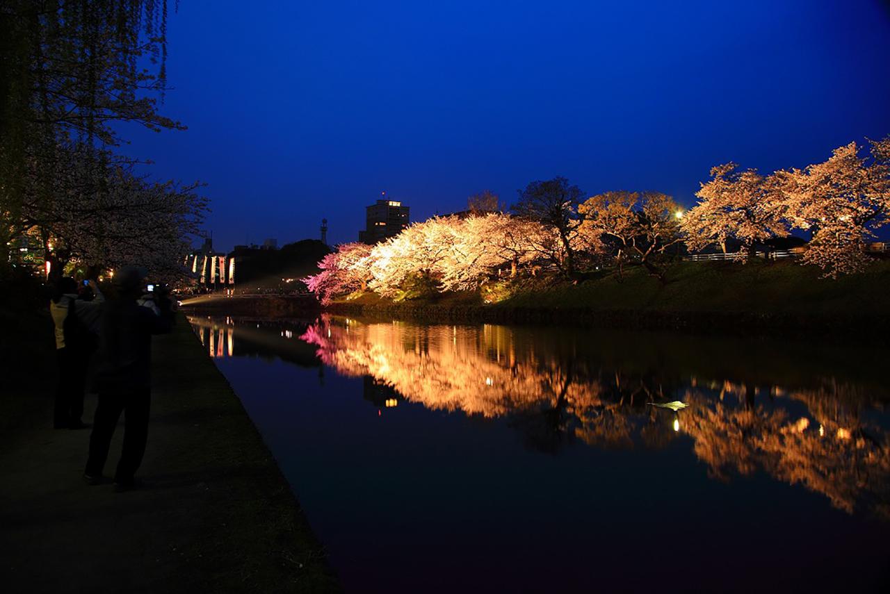 福岡市中央区舞鶴公園 桜のライトアップ1