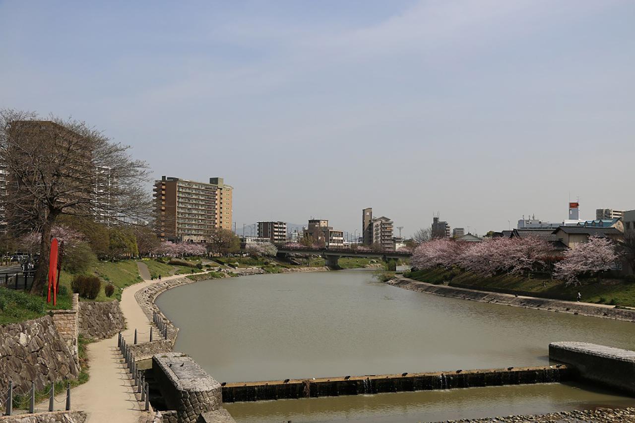 美野島南公園の桜1