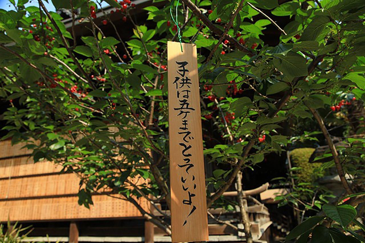 櫛田神社の桜2
