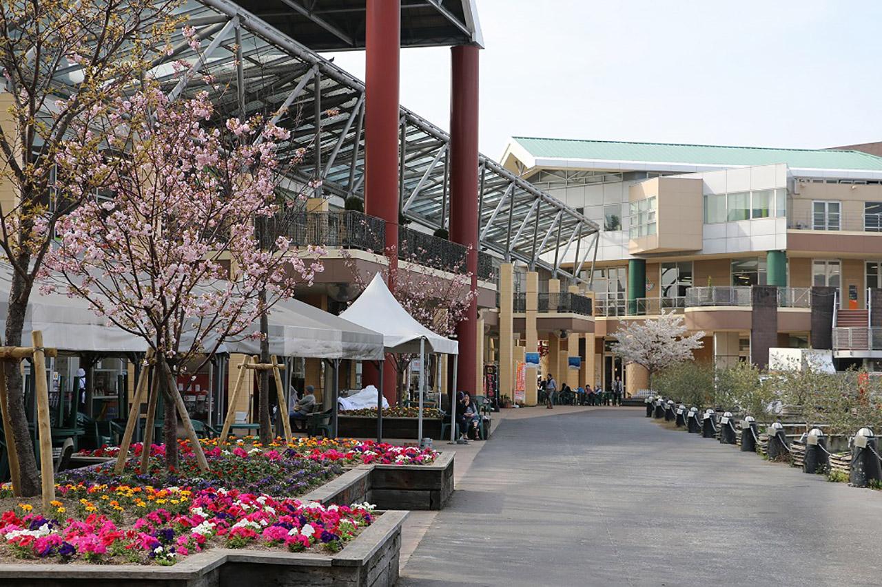 ベイサイドプレイス博多の桜3