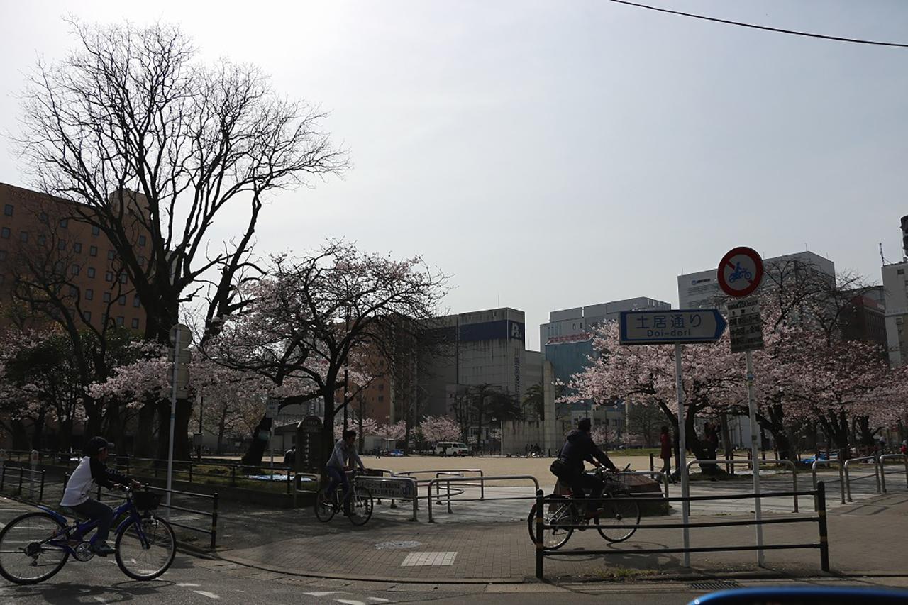 冷泉公園の桜1