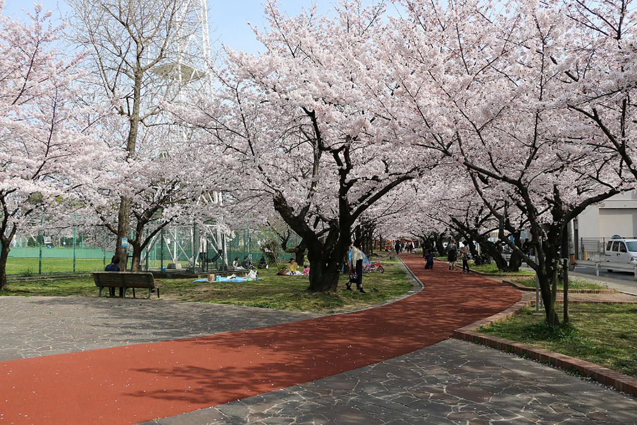 山王公園の桜4