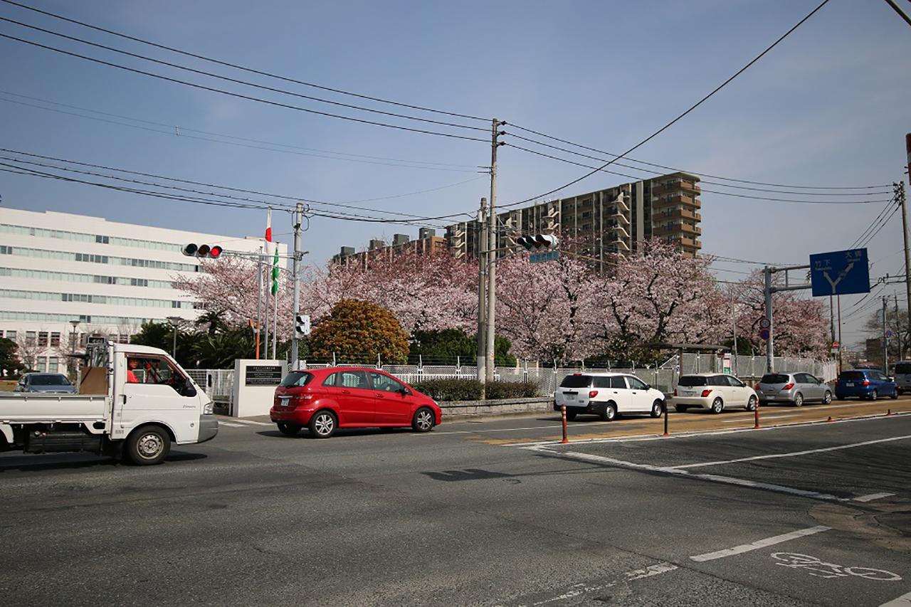 パナソニック福岡の桜2